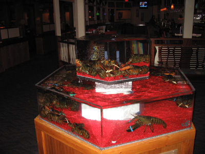 lobster-tank-at-red-lobster.jpg